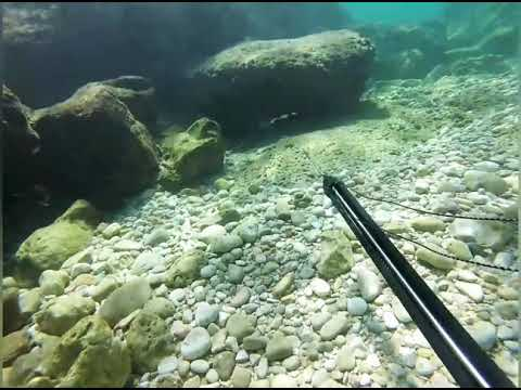 Spearfishing Middle East