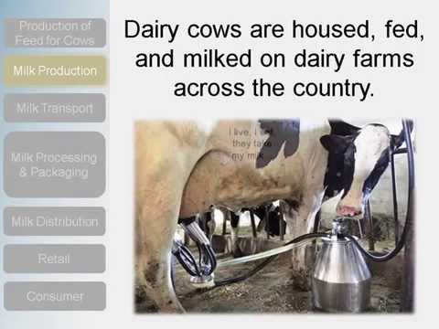 Supply Chain Video - The Milk Story