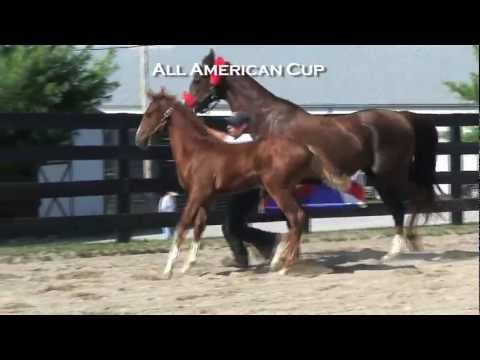 Alliance Stud - All American Cup 2011