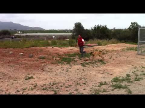 Pistola Taurus PT-58 HC Plus em .380 ACP de YouTube · Duração:  14 minutos 1 segundos