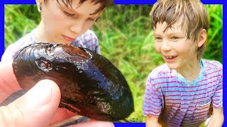 SUPER RARE 100 Year Old Mussel