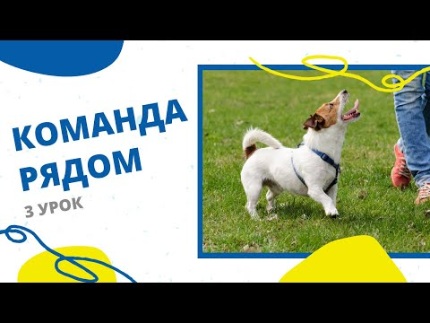 Вопрос: Как обучить собаку помощника без профессионального инструктора?