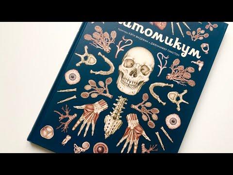 Анатомикум | Энциклопедия о строении человеческого тела