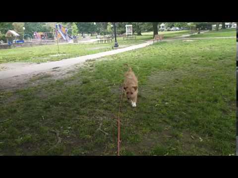 Dog Training   Dog on long line recall training   Solid K9 Training Dog Training