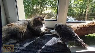 Сова хочет обнимашек с котиком. И играть во все игрушки сразу!