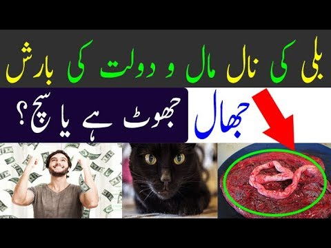 Excellent Benefits To Keeping The Cat|Billi Ki Naal Se Paison ki Barish