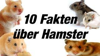 10 Fakten über Hamster