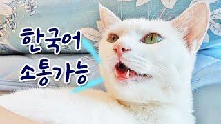 K-고양이 3년이면 한국말 능통냥이 됩니다 (사투리까지…