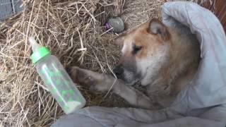 Старенький пёс с Полевой