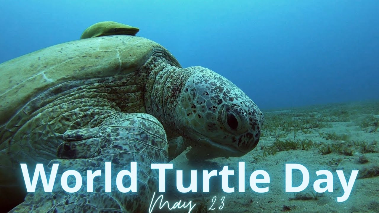 World Turtle Day, 23 May 2020