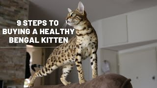 9 Steps to Buying a Healthy Bengal Kitten