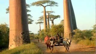 UNCCD Sustainable Land Video