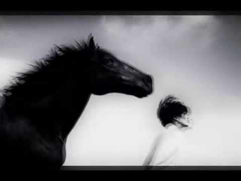 Q Lazzarus  Good e Horses