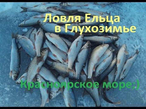 зимняя рыбалка прикормка для ельца