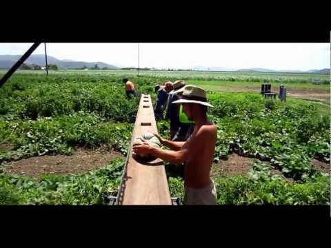 My Australia | Part 6 of 21 | Pumpkin Farm | Fruit picking