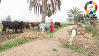 تعرف على حالة الطقس فى انحاء محافظة بني سويف ليوم الاربعاء 1 فبراير 2017