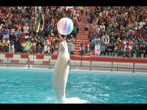 Amazing DOLPHIN SHOW - Official Full Episode