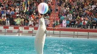 Download Amazing DOLPHIN SHOW - Official Full Episode Mp3 and Videos