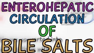 The Enterohepatic Circulation of Bile Salts