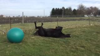 Kobe and his horse ball.  This video has been viewed over 4 million times!
