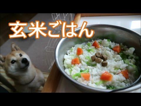 柴犬小春 【ASMR】大興奮!玄米ご飯でロケットスタート!brown rice音フェチ・飯テロ