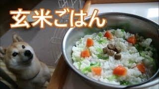 動画内の食材はチェックしたうえで、小春にとって大丈夫な量を与えております。 もしもこの動画を観て、『我が家の犬にもあげたいな』と思っ...