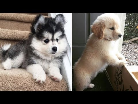 ♥Cute Puppies Doing Funny Things 2019♥ #21  Cutest Dogs