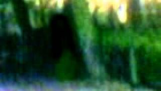 Ghost Penampakan Kuntilanak By_qriwoll Aisyteru