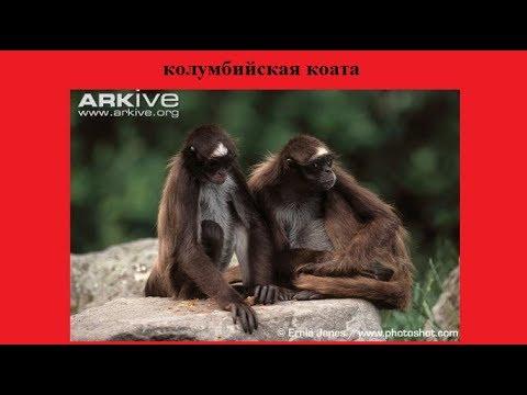 Международная Красная книга. Редчайшие животные. Часть 2