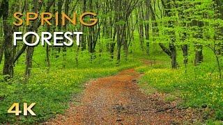 4K Spring Forest - Blackbird Song - Bird Singing/ Chirping - Ultra HD Relaxing Nature Video & Sounds