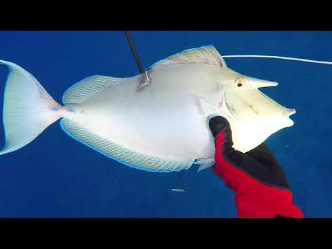 Spearfishing 2018 Fakarava/Raiatea IX