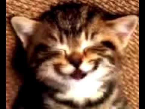 Mới lạ: mèo con hát happy birthday