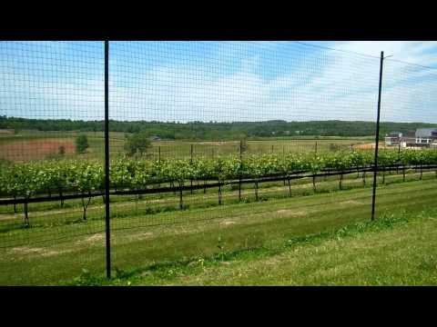 Virginia Wine: Stone Tower Winery