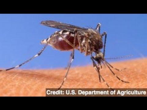 New Vaccine Boasts 100 Percent Effectiveness Against Malaria