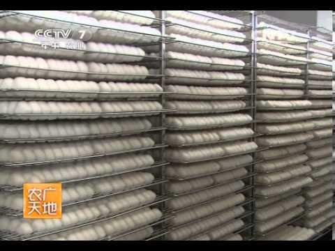 农广天地 《农广天地》 20140211 腐乳加工技术