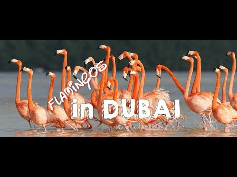 Ras Al Khor Wildlife Sanctuary I Flamingos in Dubai I wildlife Santuary in Dubai