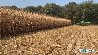 рекордный в России урожай кукурузы зафиксирован в Краснодарском крае 2019 год