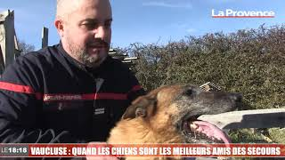 Vaucluse : quand les chiens sont les meilleurs amis des secours