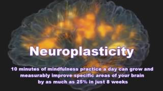 Mindfulness Advantage Peak Brain Performance Training (Neuroplasticity)