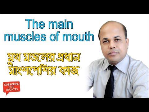 মুখ মণ্ডলের প্রধান মাংশপেশির কাজ। Working Process of The main muscles of mouth