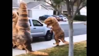 2016 динозавры прикол смех