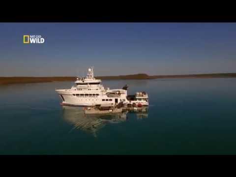 Секретная жизнь жемчужин - The Secret Life Of Pearls 2015 Nat Geo Wild