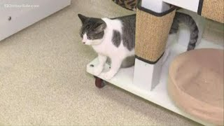 Kent Co. Animal Shelter's Empty the Shelter event happening today