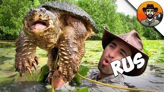 ЛОВИМ КАЙМАНОВЫХ ЧЕРЕПАХ! / Мои Любимые Черепахи  Brave Wilderness на русском
