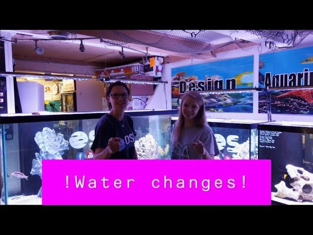 Why water changes are so important !