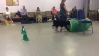 Dog Training - Class 2 In Lingfield Surrey