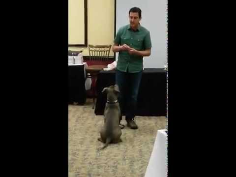 Teaching a Recall with Hand Targeting - Positive Reinforcement Dog Training