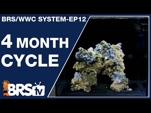 Ep12 - The BRS/WWC Hybrid 4-month SPS tank cycle. - The BRS/WWC System | BRStv