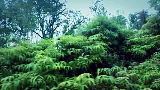 Ali Kuru - Return To Paradise