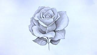 Уроки рисования. Как нарисовать РОЗУ карандашом ! How to Draw a Rose(Как нарисовать розу карандашом ▻ Скачайте видео урок